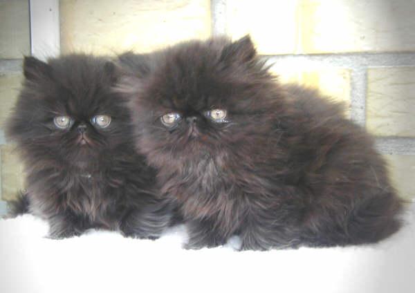 katte til salg